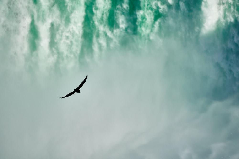 bird on water falls