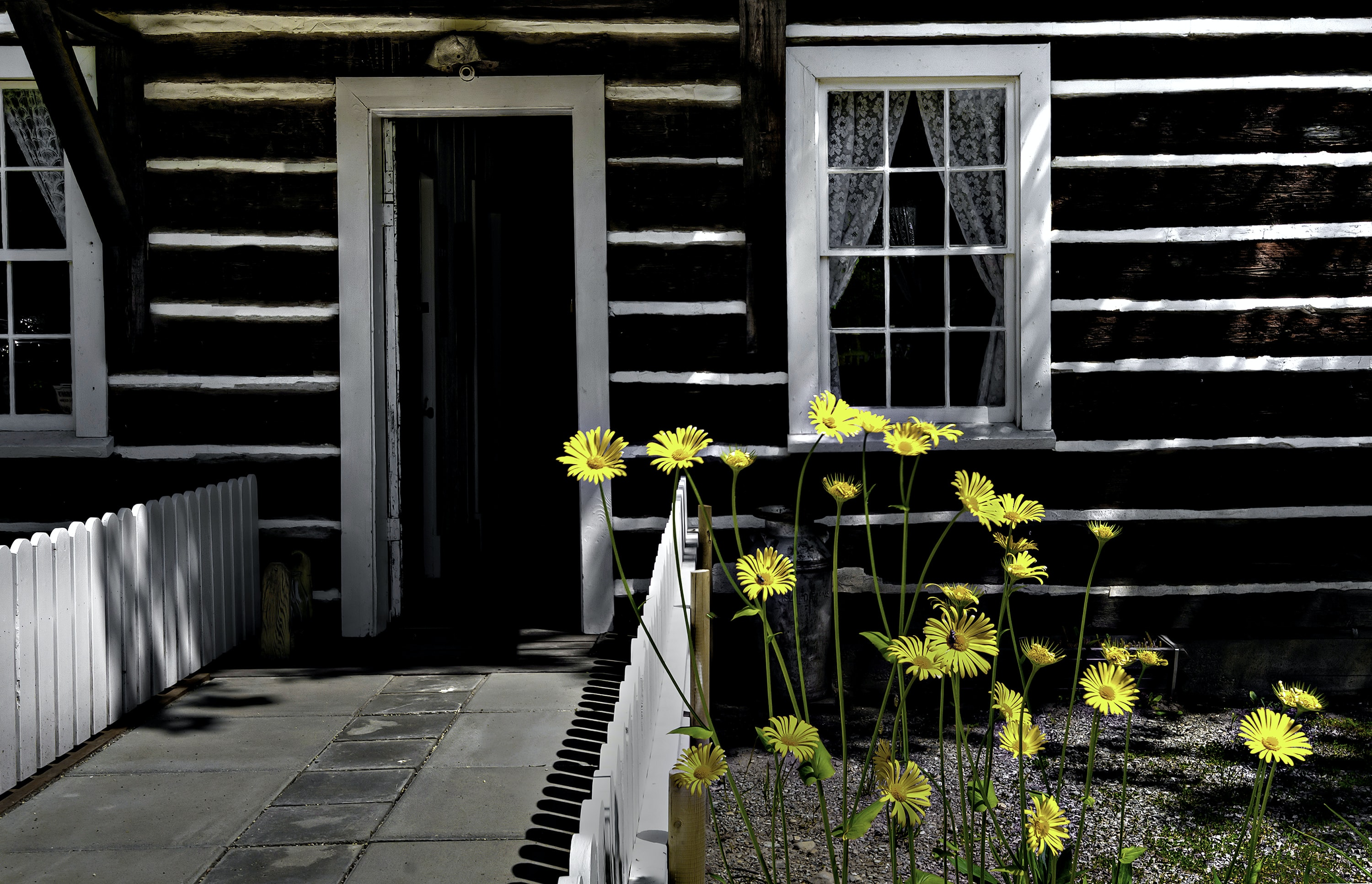 blooming yellow petaled flowers outside house
