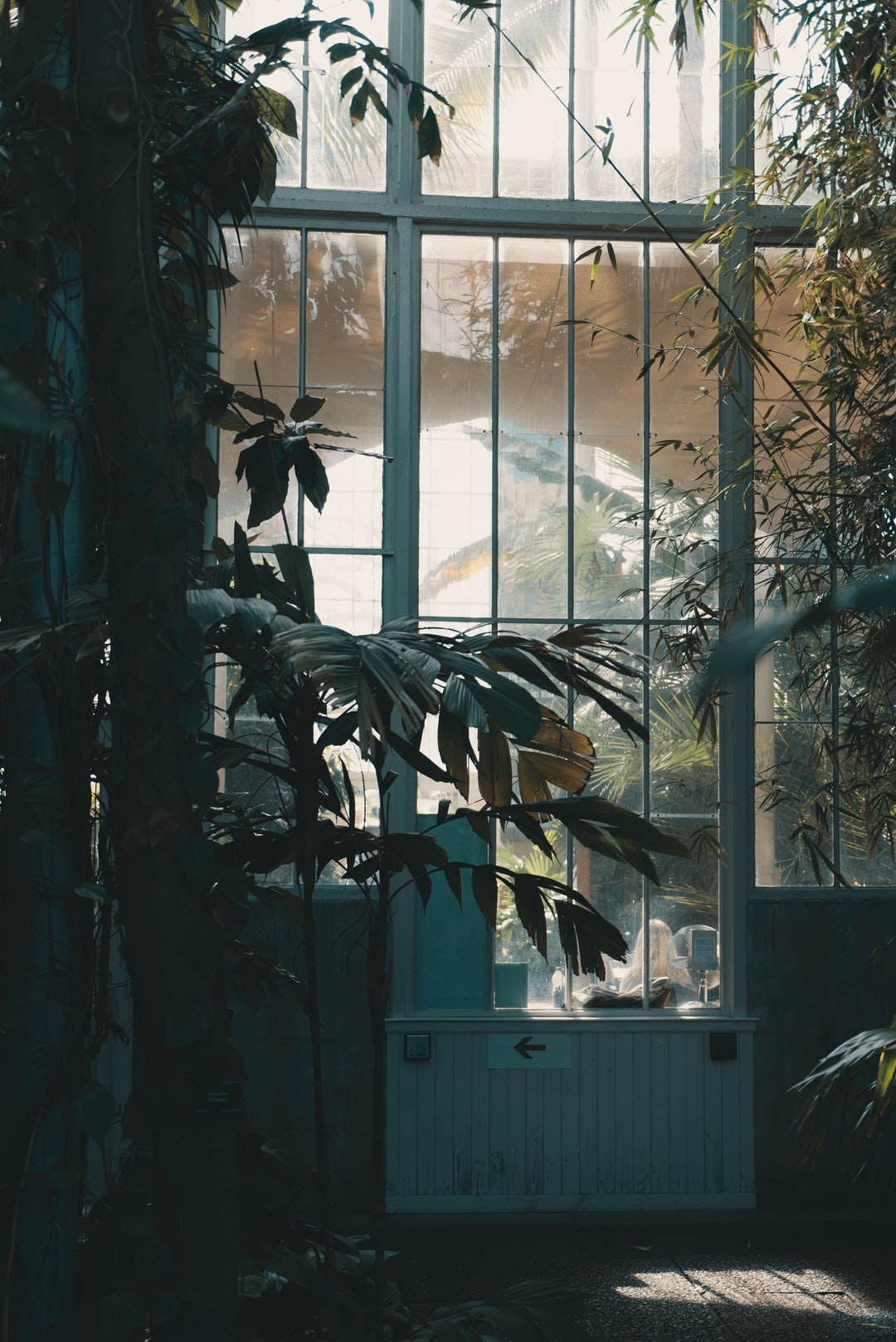 photo of potted plants beside glass window