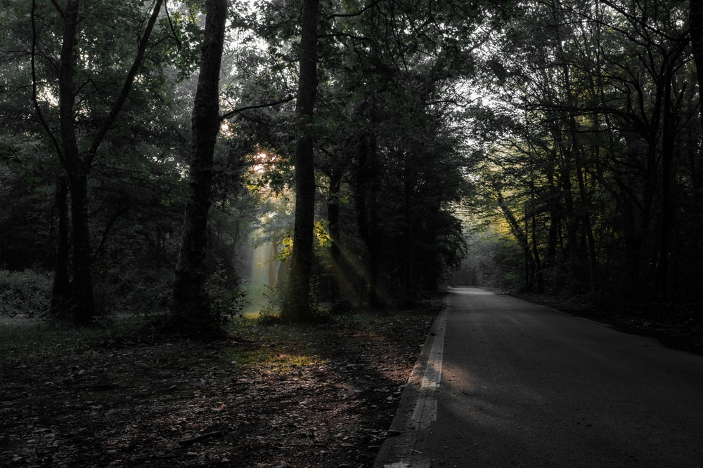 road beneath a forest