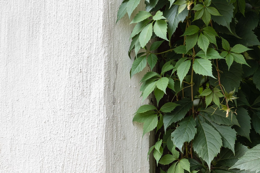green plant beside white surface