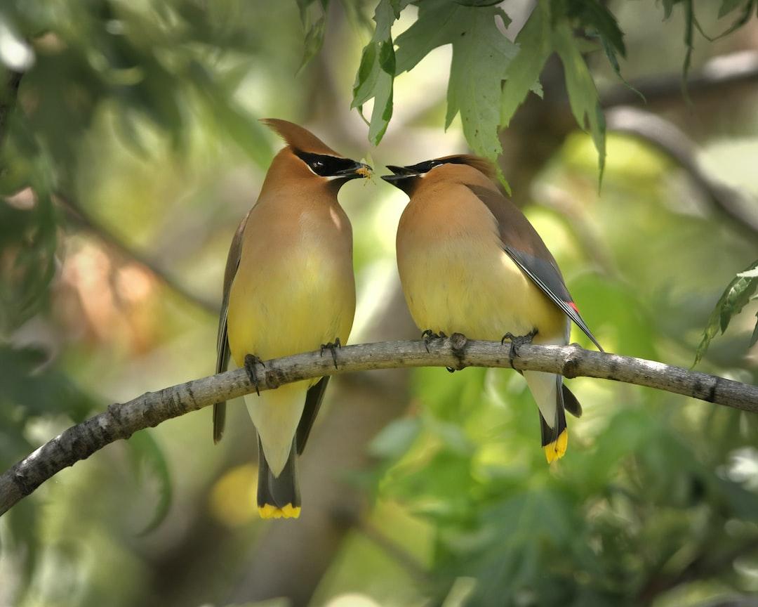 Birds Helping Birds
