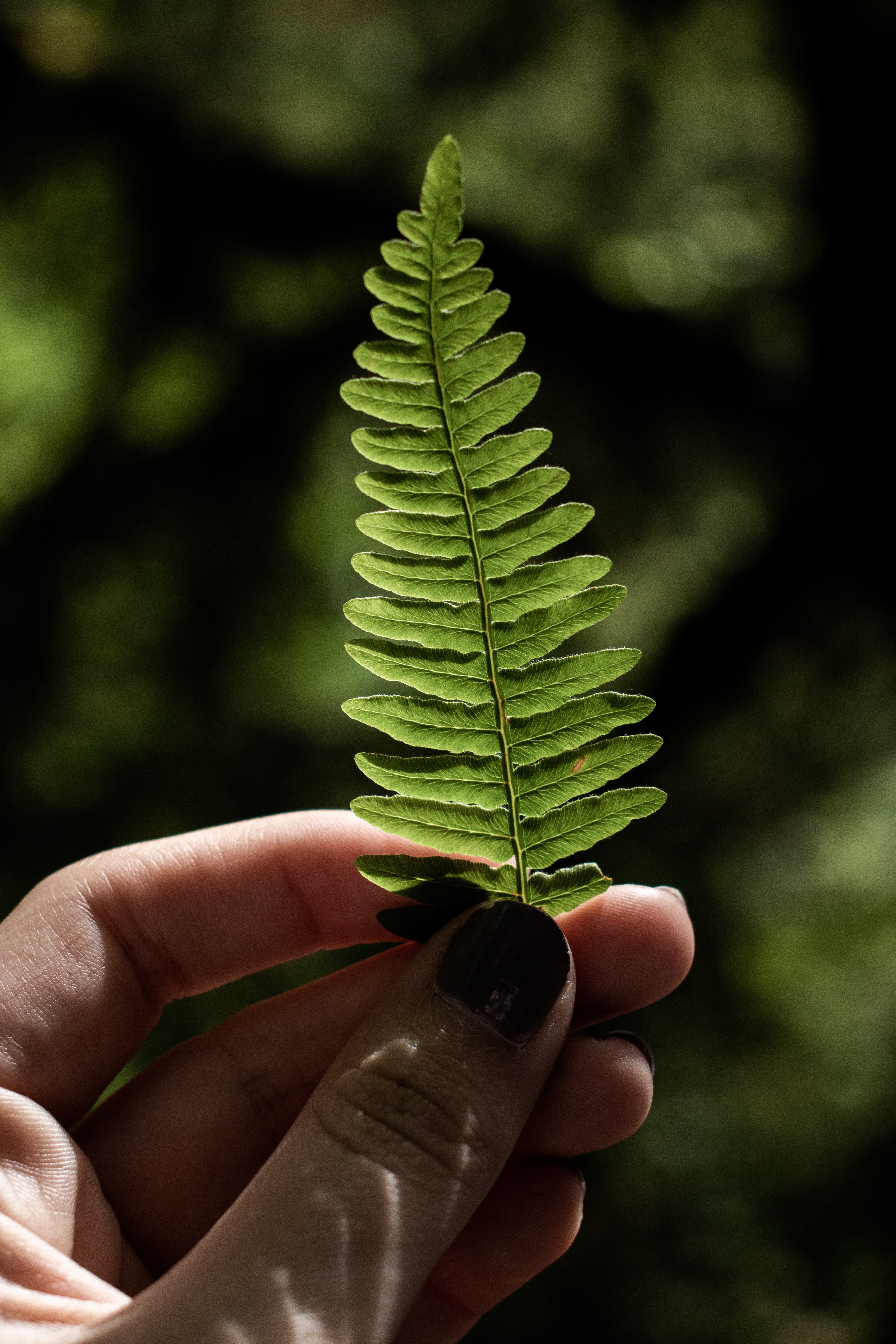 close up photography of person holding green fern plant