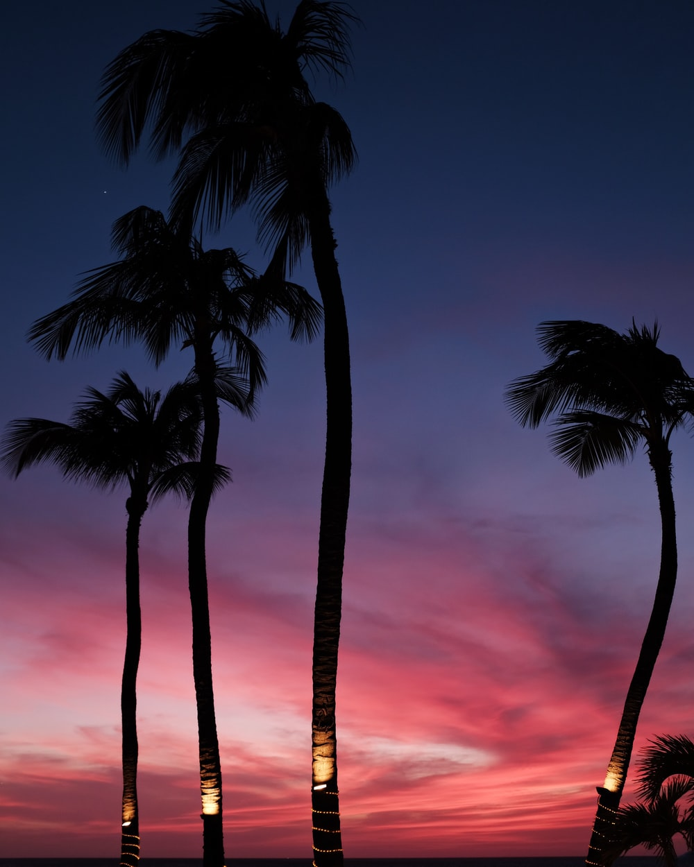 palm trees and a sunset in Aruba