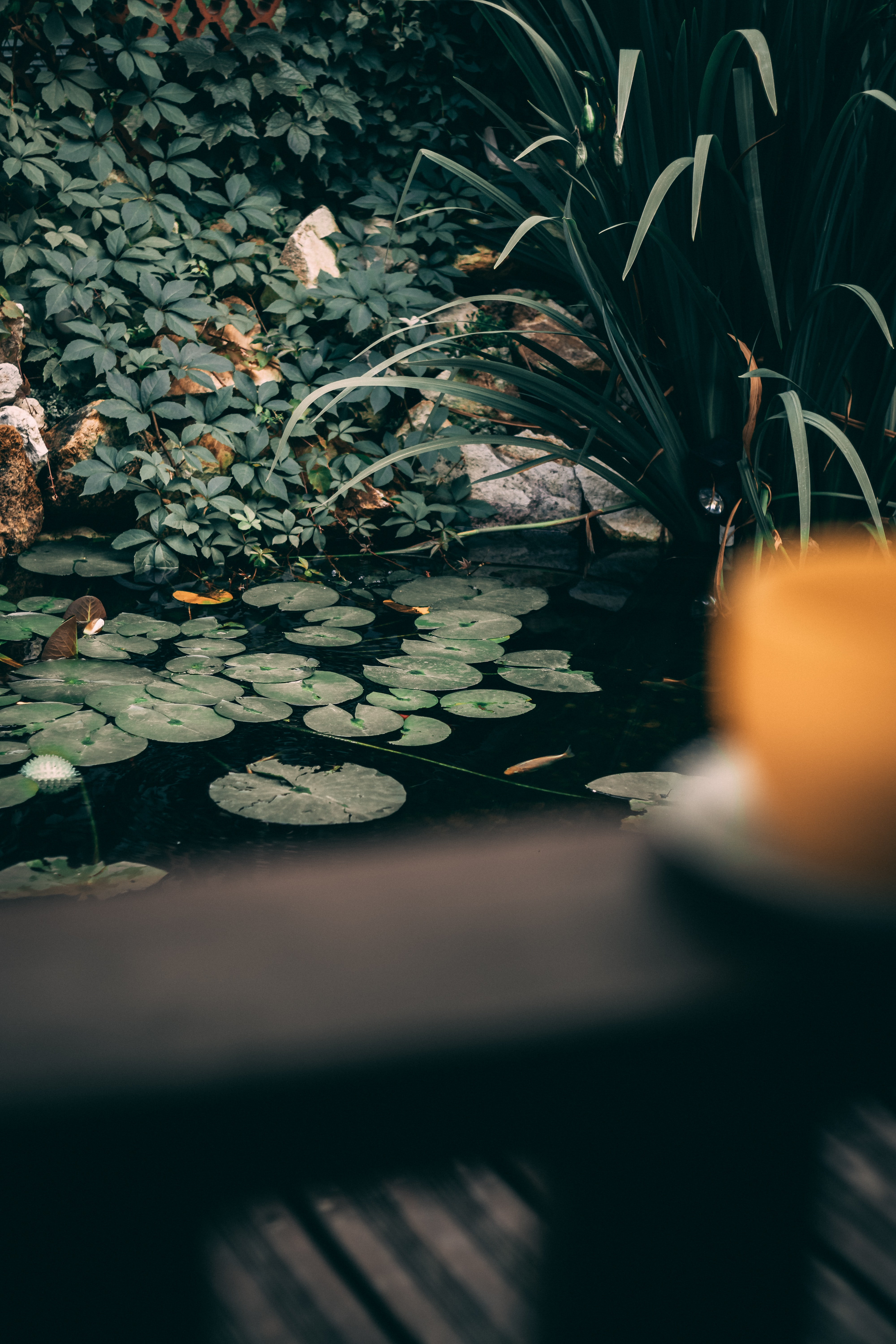 water lily on body of water