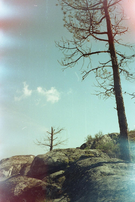 two leafless trees on mountain