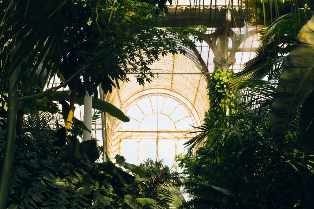 In the Palm House on a hot summers day temperatures sore and humidity levels reach an all time high. As the sunlight poured through the giant glass windows creating a golden glow, I stopped for a minute with sweat dripping down my face, to take this photo.