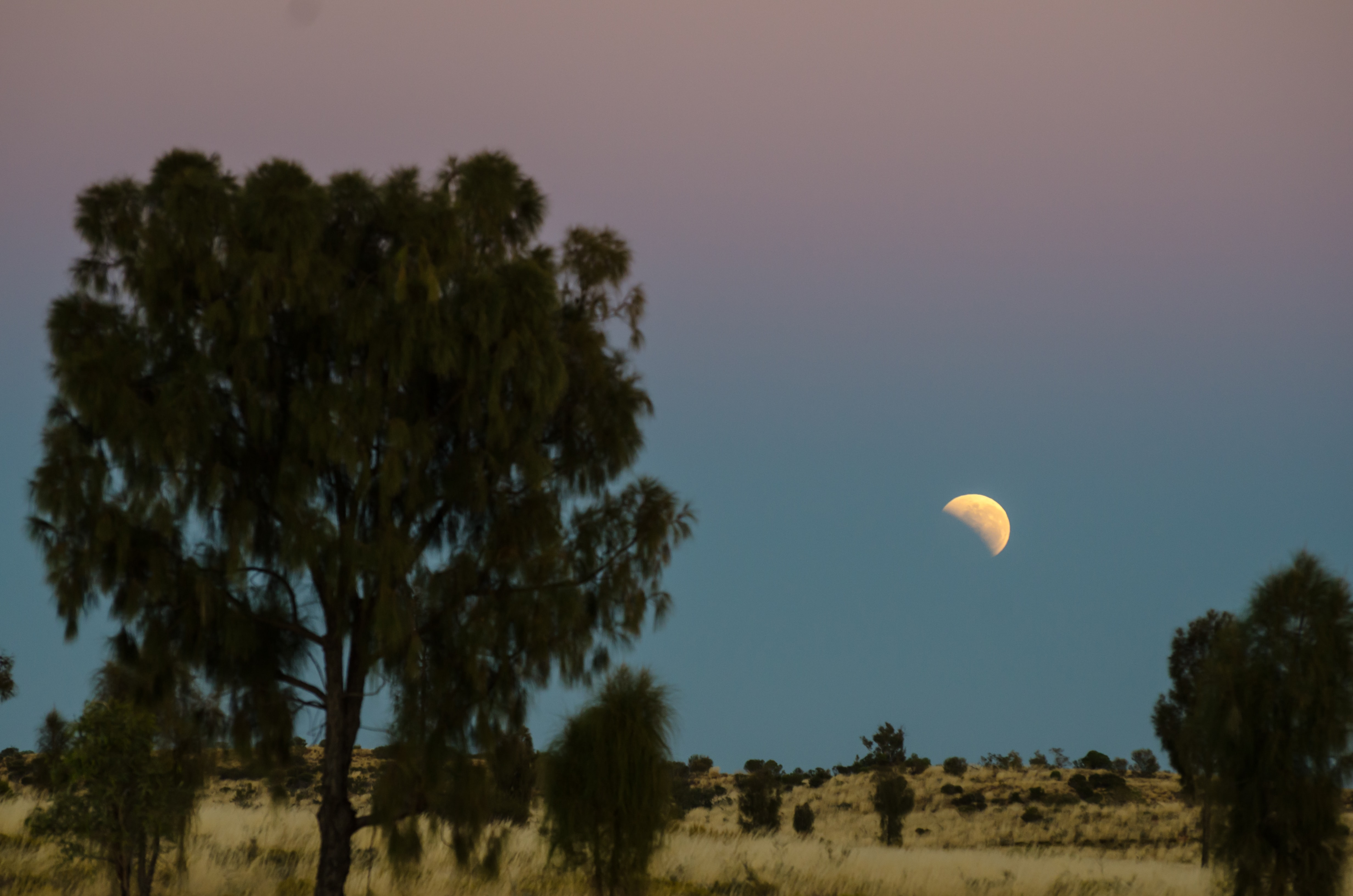 trees on field under crescent moon
