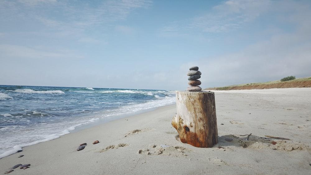carin on brown tree log near seashore
