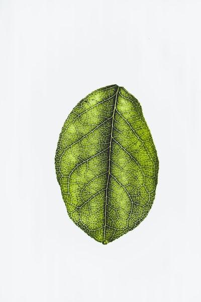 1609. Növények világa