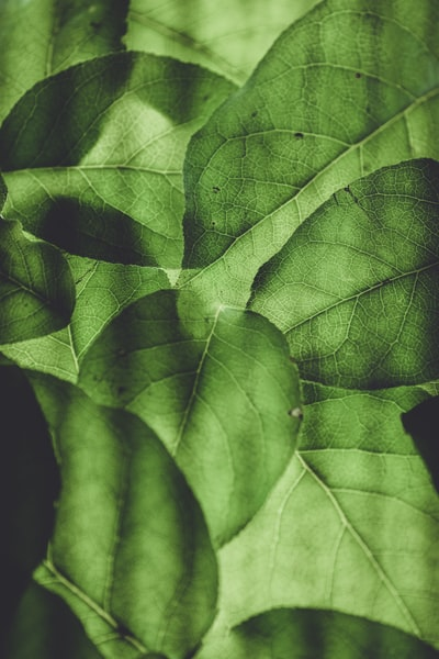 1601. Növények világa