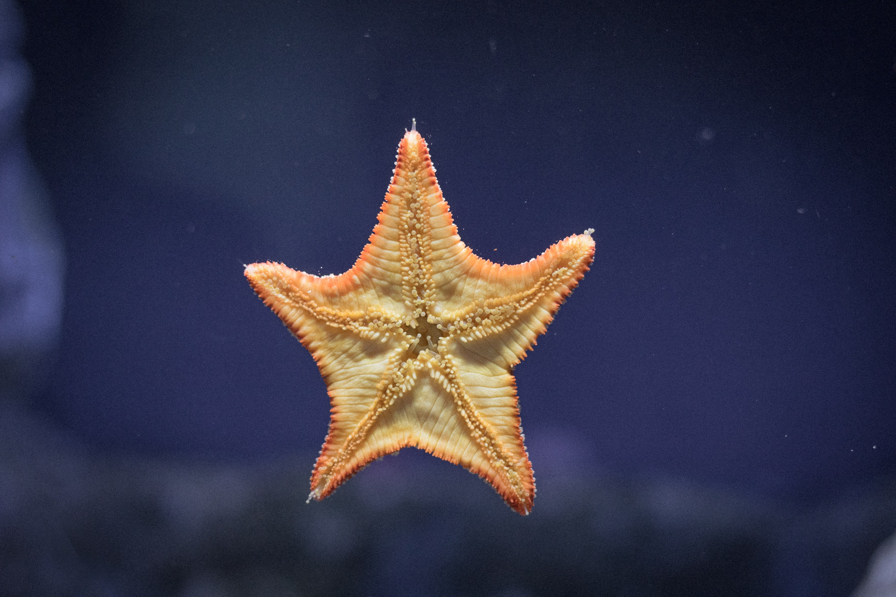 starfish on clear glass