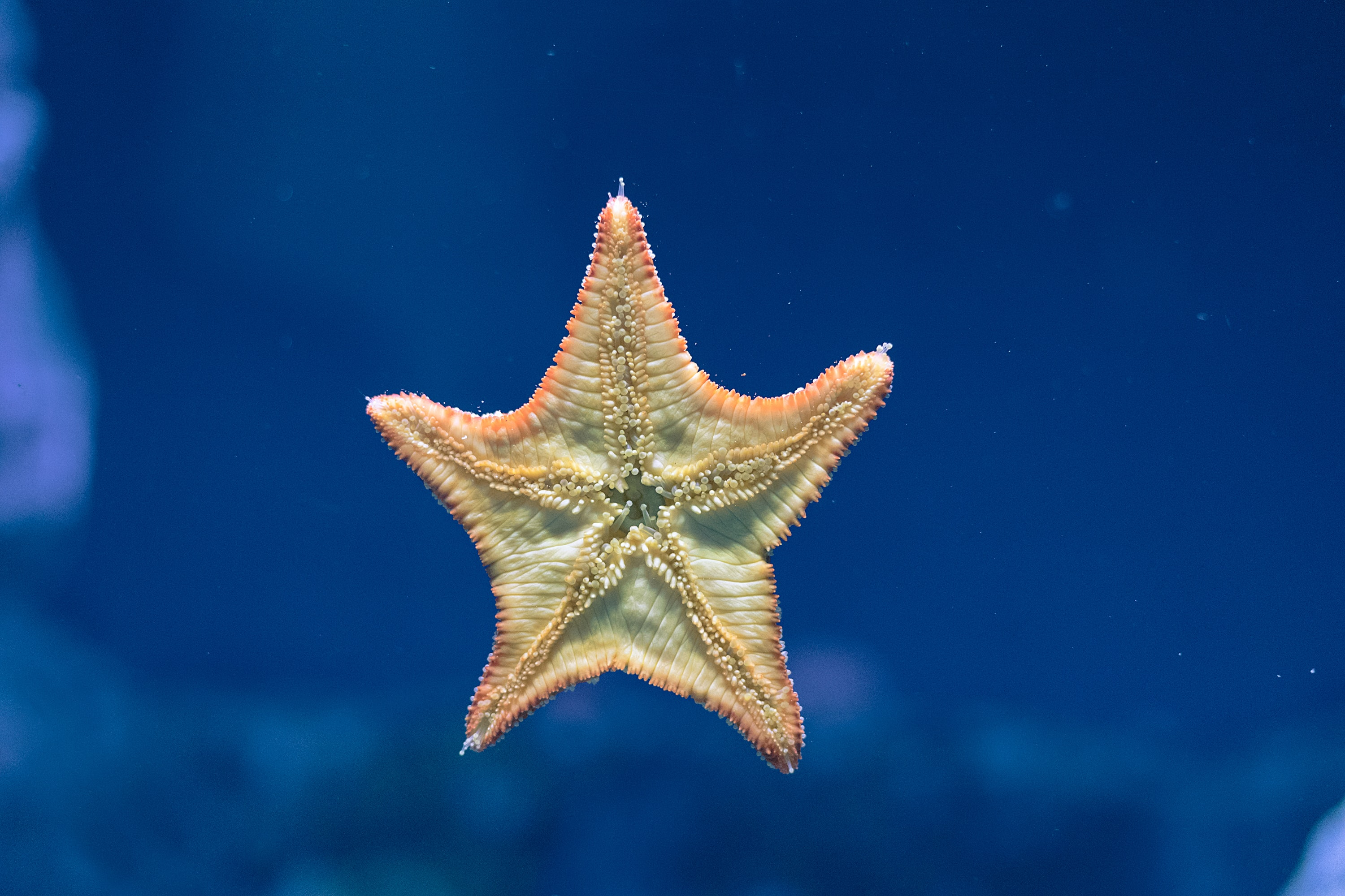green and orange star fish floating on water