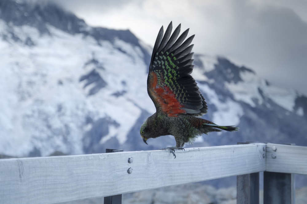 red and black bird on white wooden railings during daytime