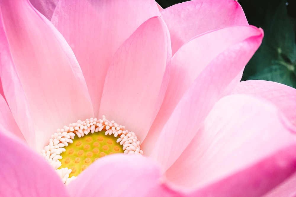 selective focus close-up photography of pink petaled flower