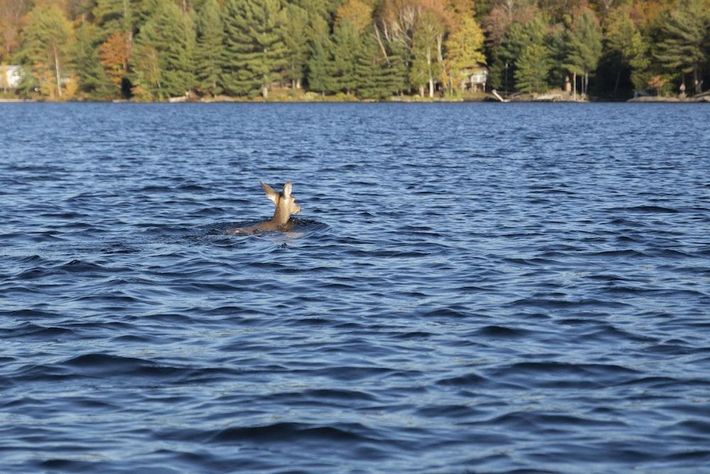 brown deer in body of water during daytime