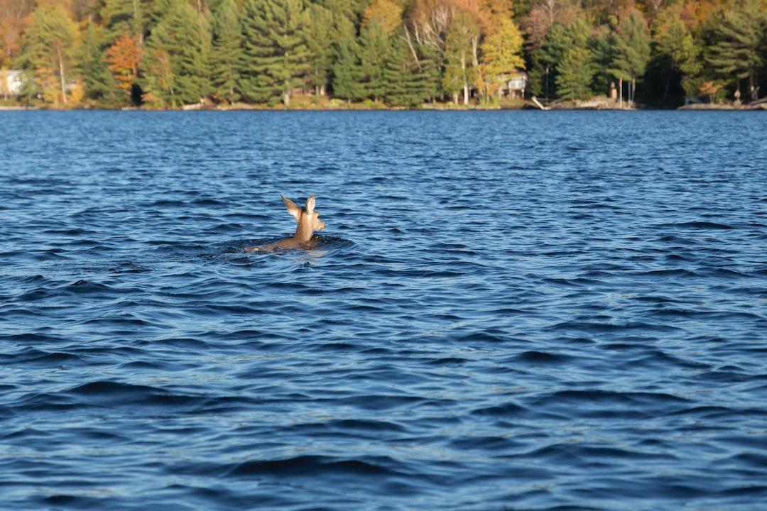 deer rescue story
