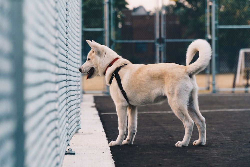 selective focus photography of dog looking at fence