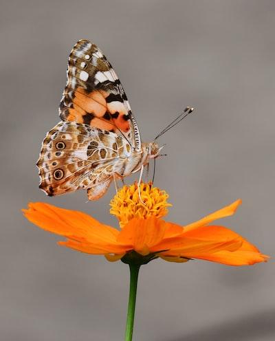A butterfly settled on flower.