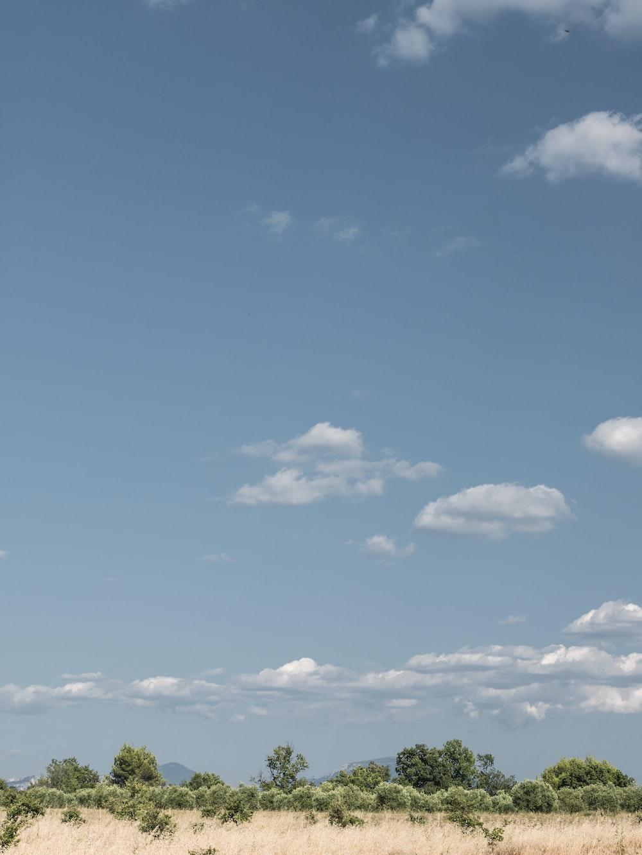 grass field under blue sky
