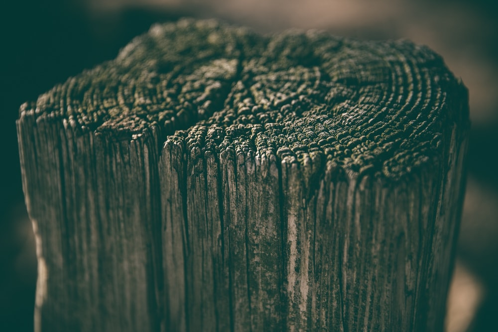 selective focus photography of driftwood