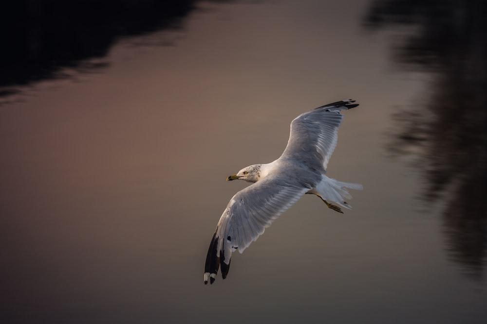 gray bird flying in mid-air
