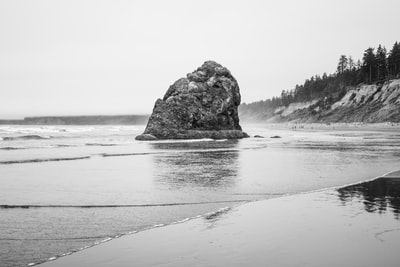 grayscale photo of sea shore pacific northwest teams background