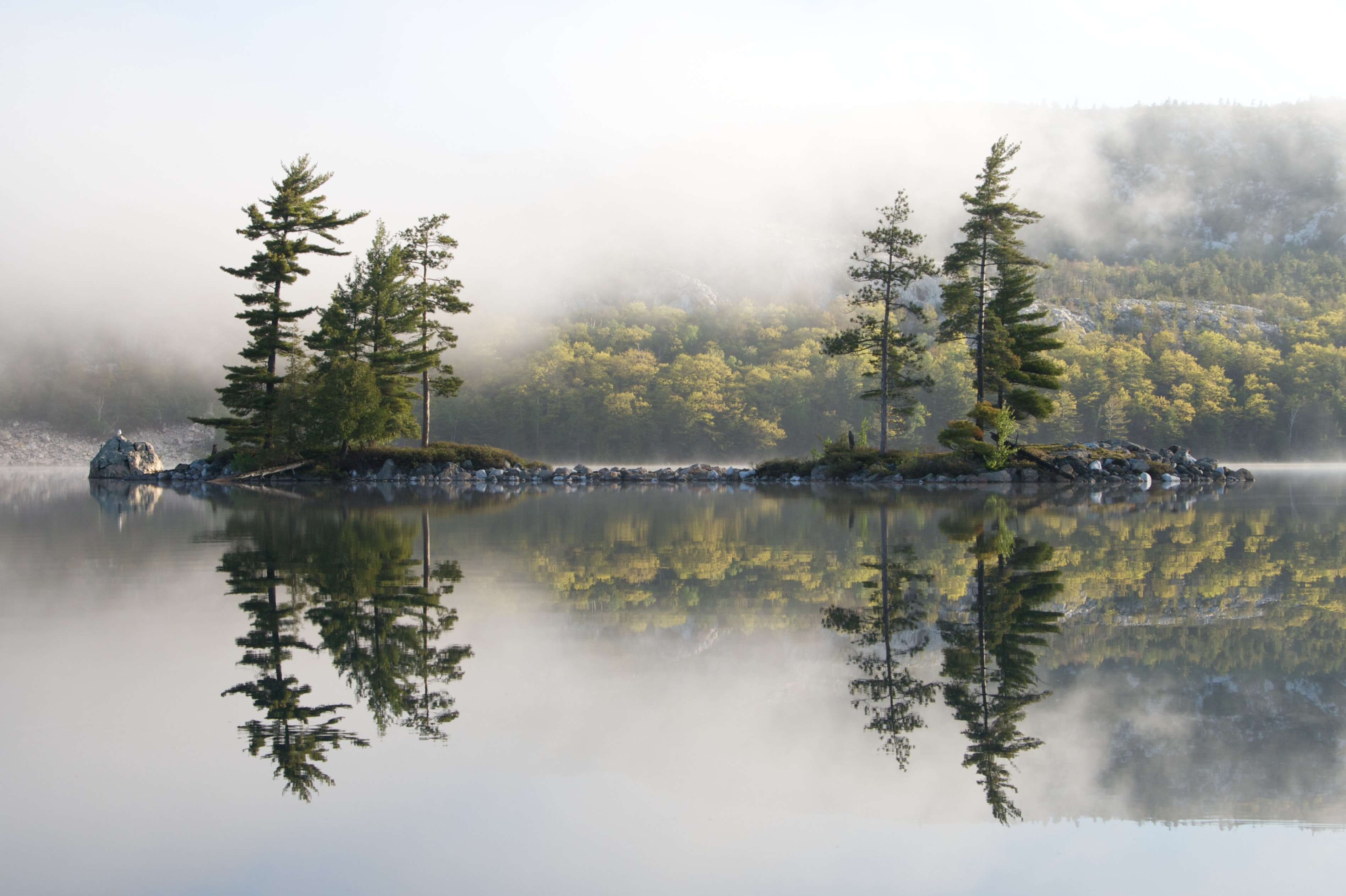 reflective photography of trees on islet near body of water