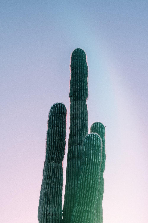 green cactus closeup photography