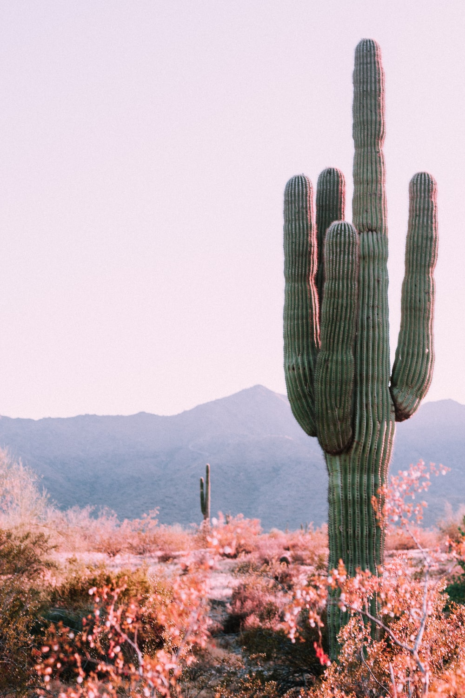 cactus plant beside orange leafed plant
