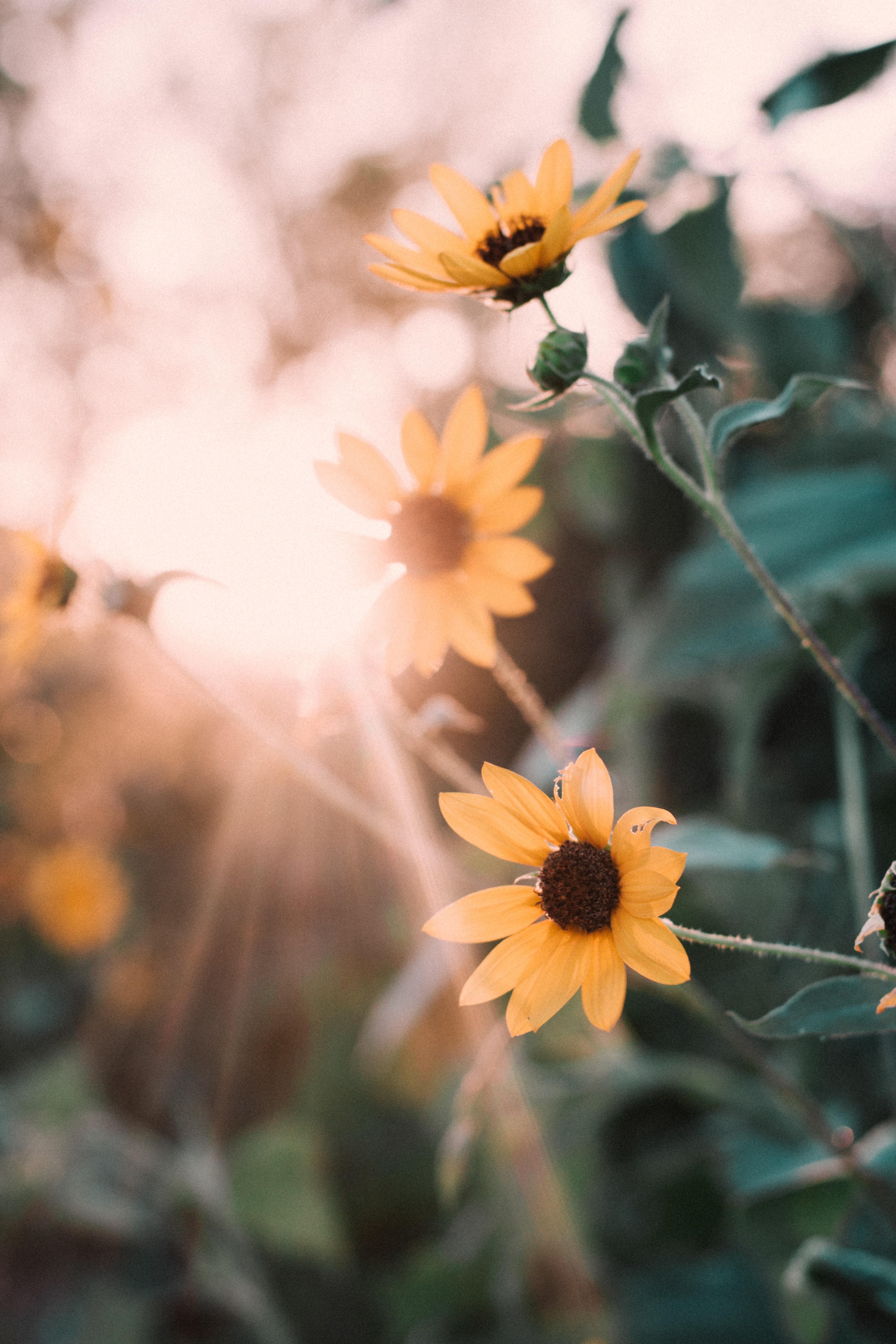 sun rays through yellow flowers during daytime