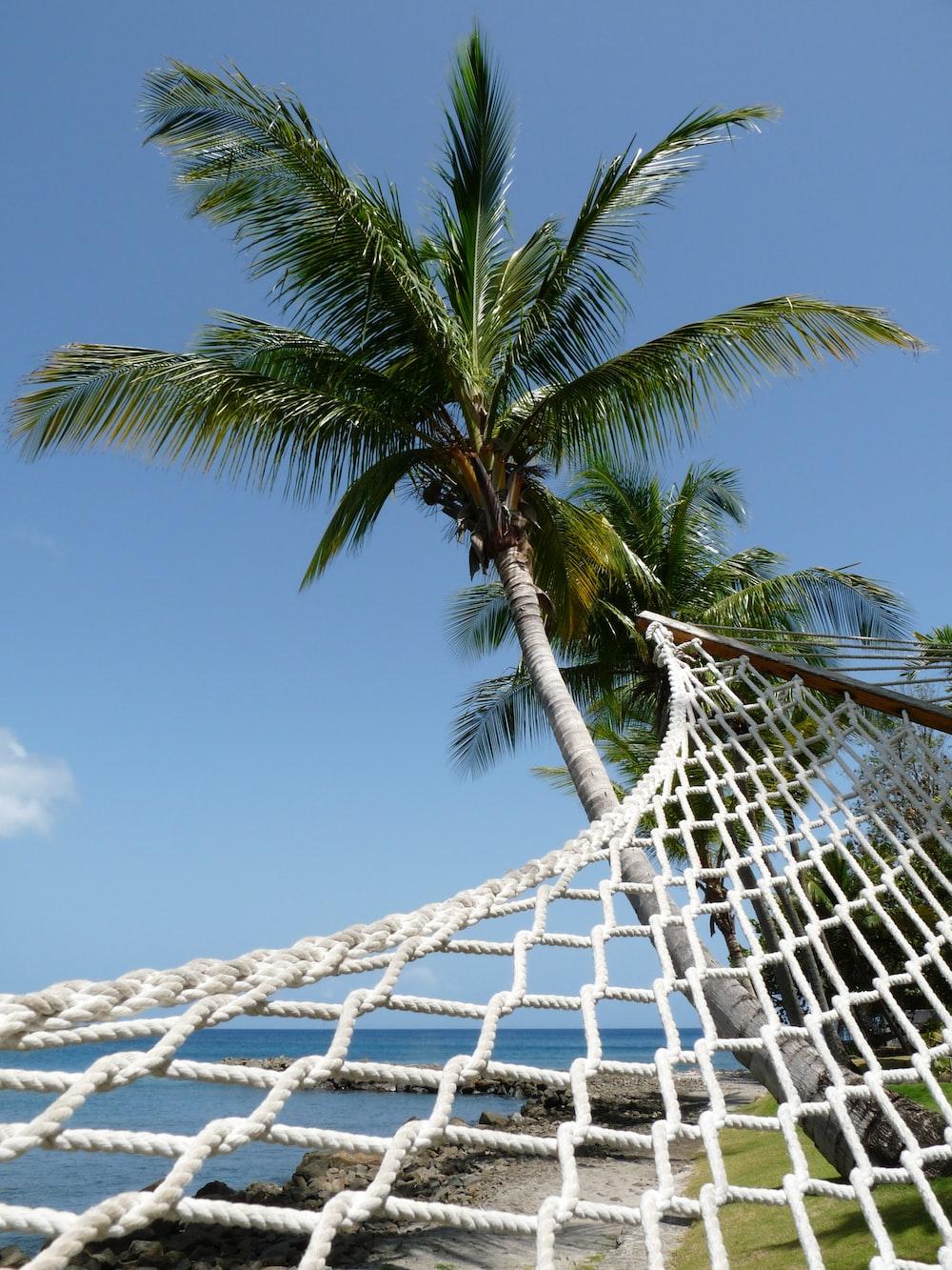 scenery of a hammock on a green palm tree