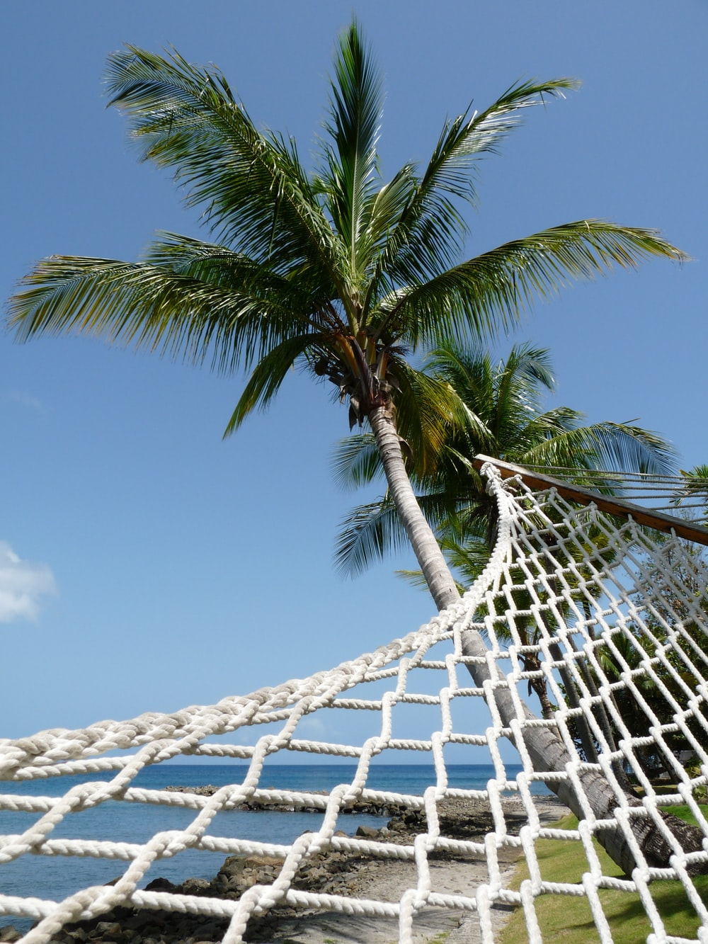 scenery of a hammock on a green palm tree