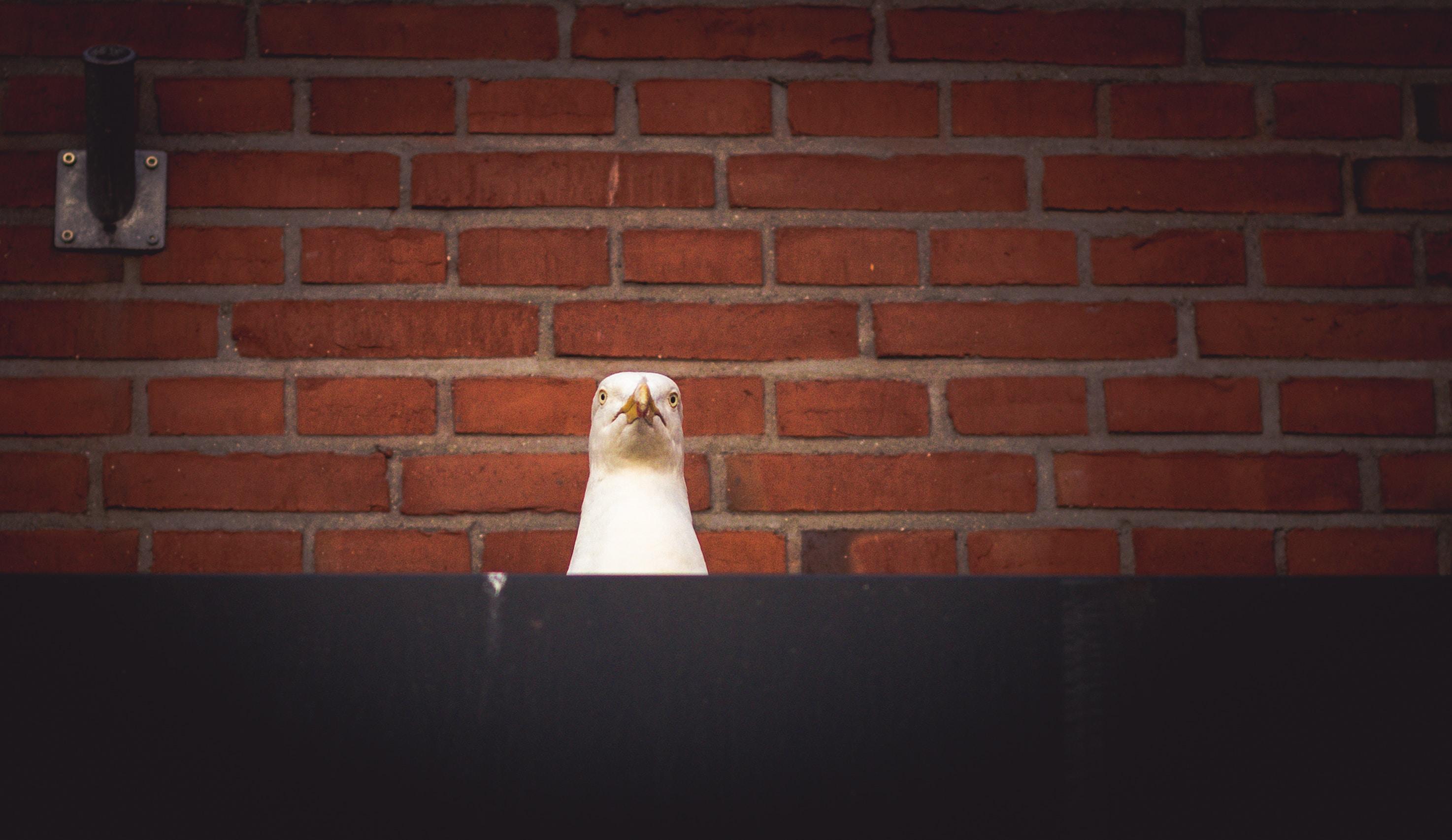 white bird near wall