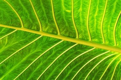 green leaf fresh zoom background