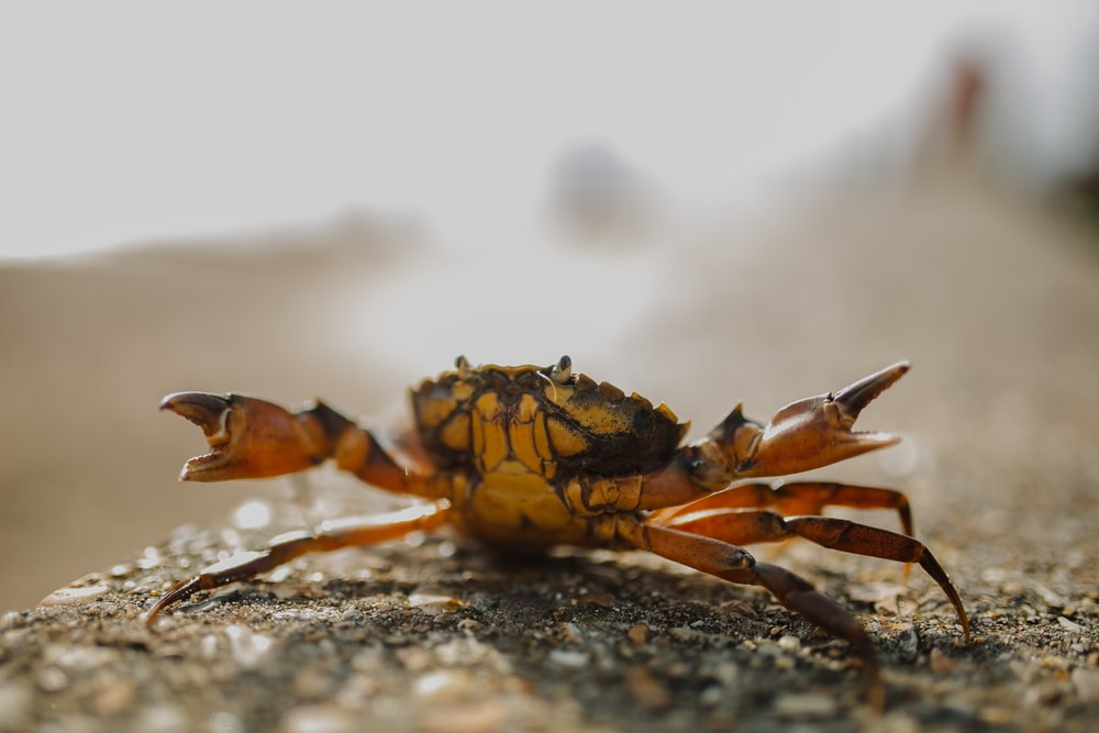 selective focus photography of crab