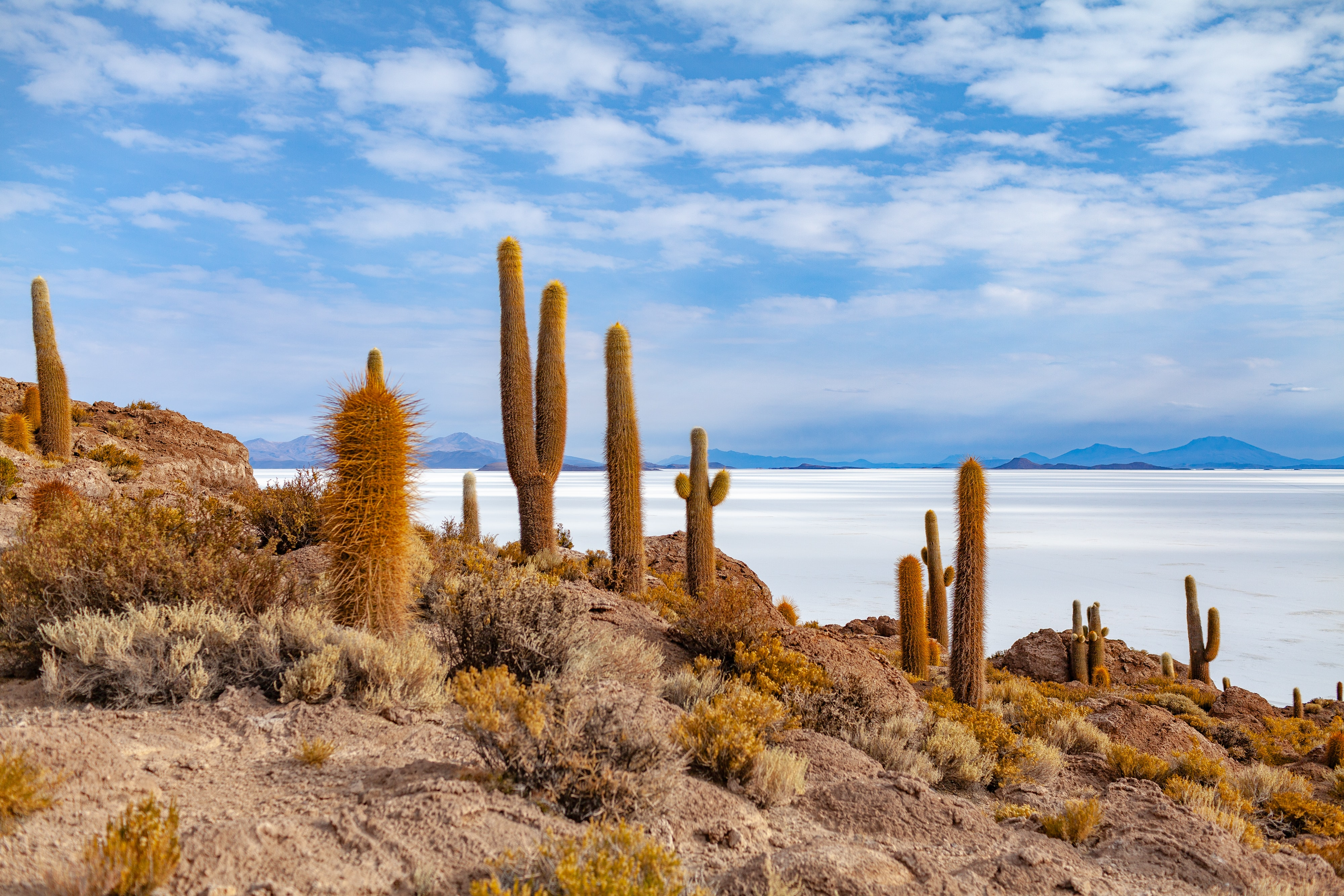 cactus plants near body of water