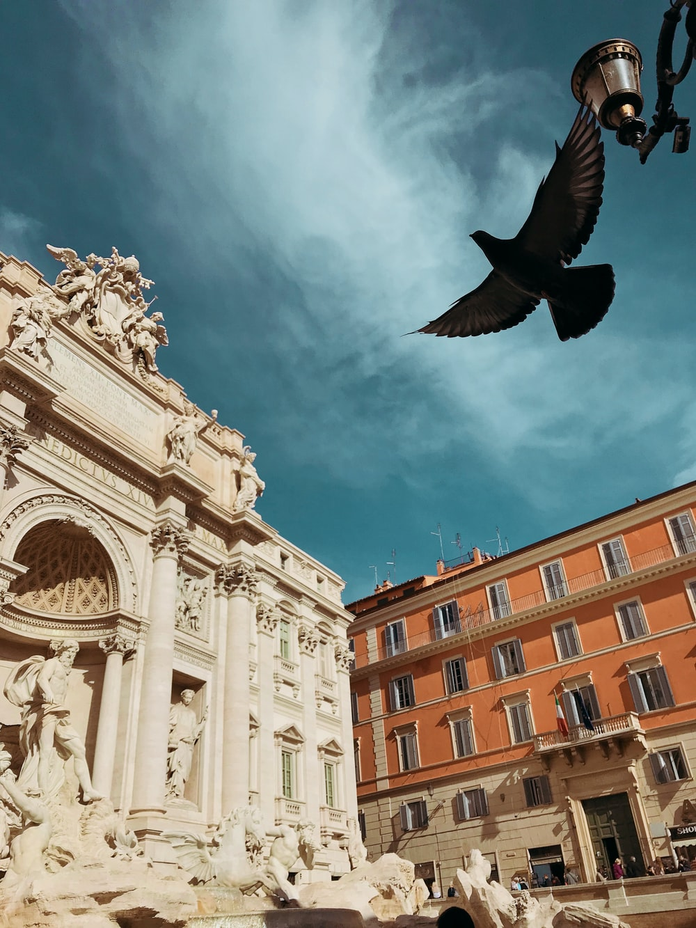 soaring bird near building