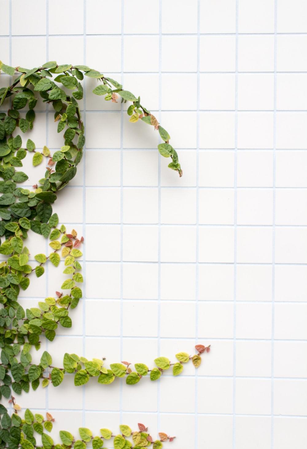 green leafed plant beside tiles