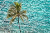 coconut tree beside body of water