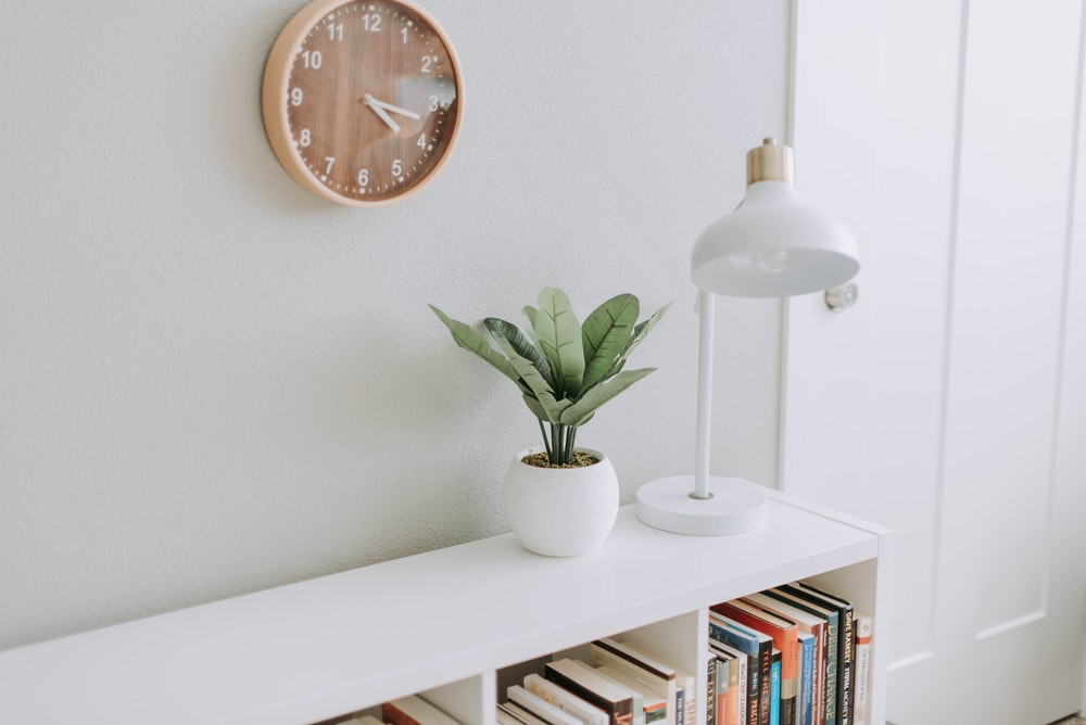 green plant on white pot beside white study lamp