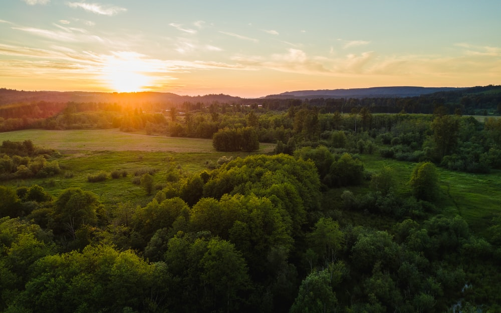 aerial photo of green trees during sunrise
