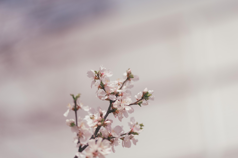 closeup photo of petaled flower