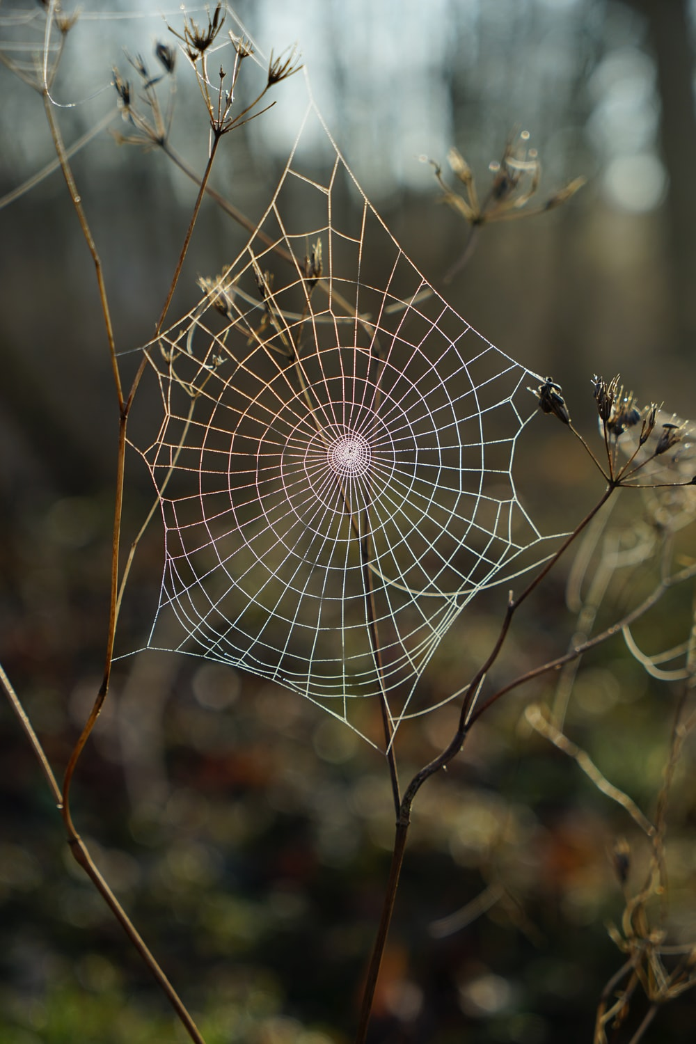 shallow focus photography of spider web