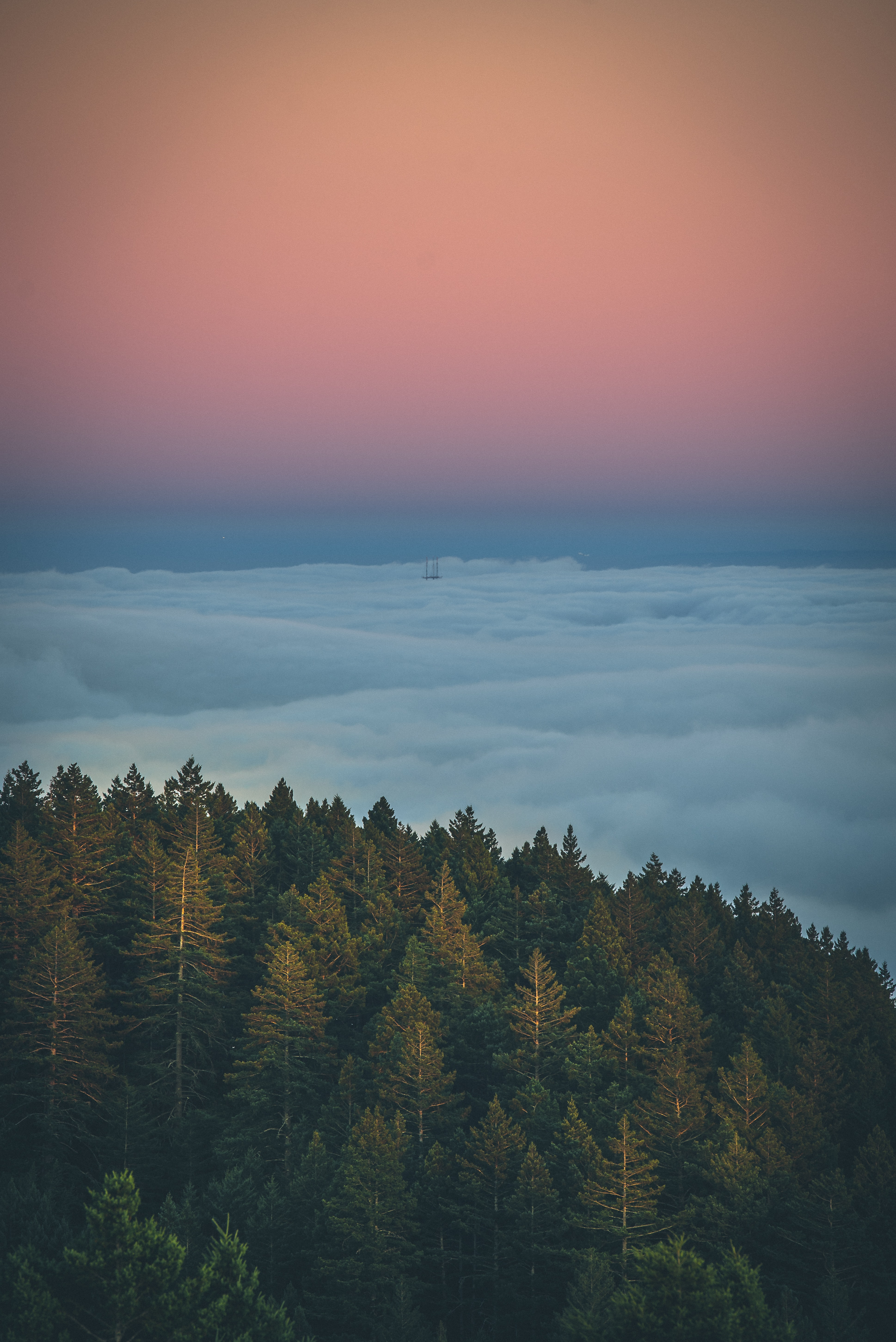 aerial view of pine trees and clouds