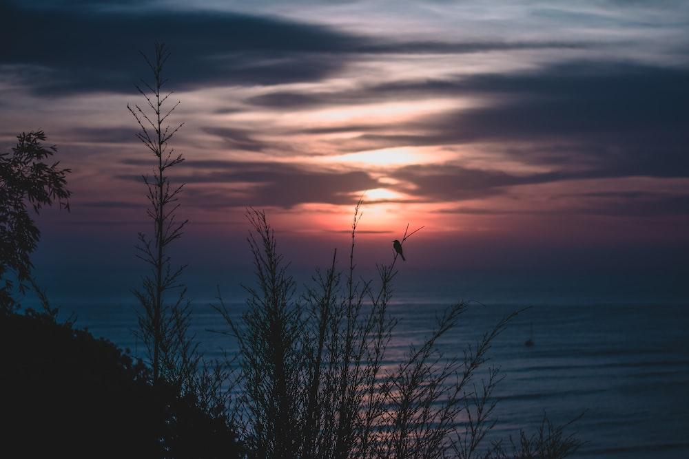 grass silhouette near beach under golden hour