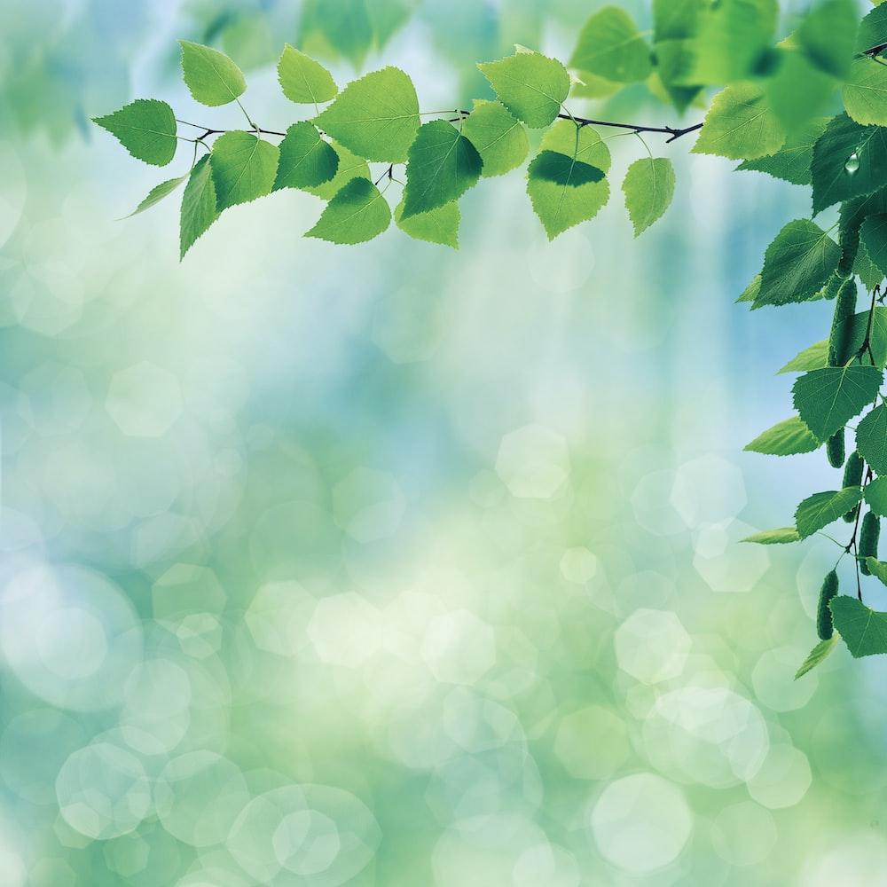 tree leaves macro photography