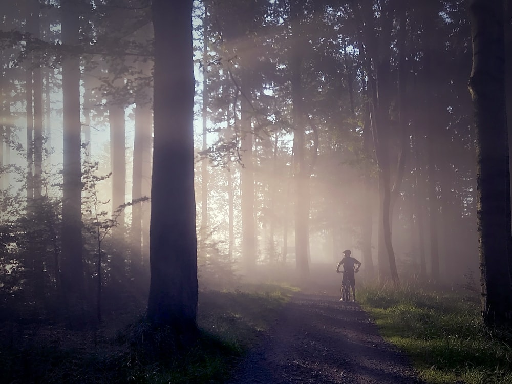 man riding bicycle on forest silhouette