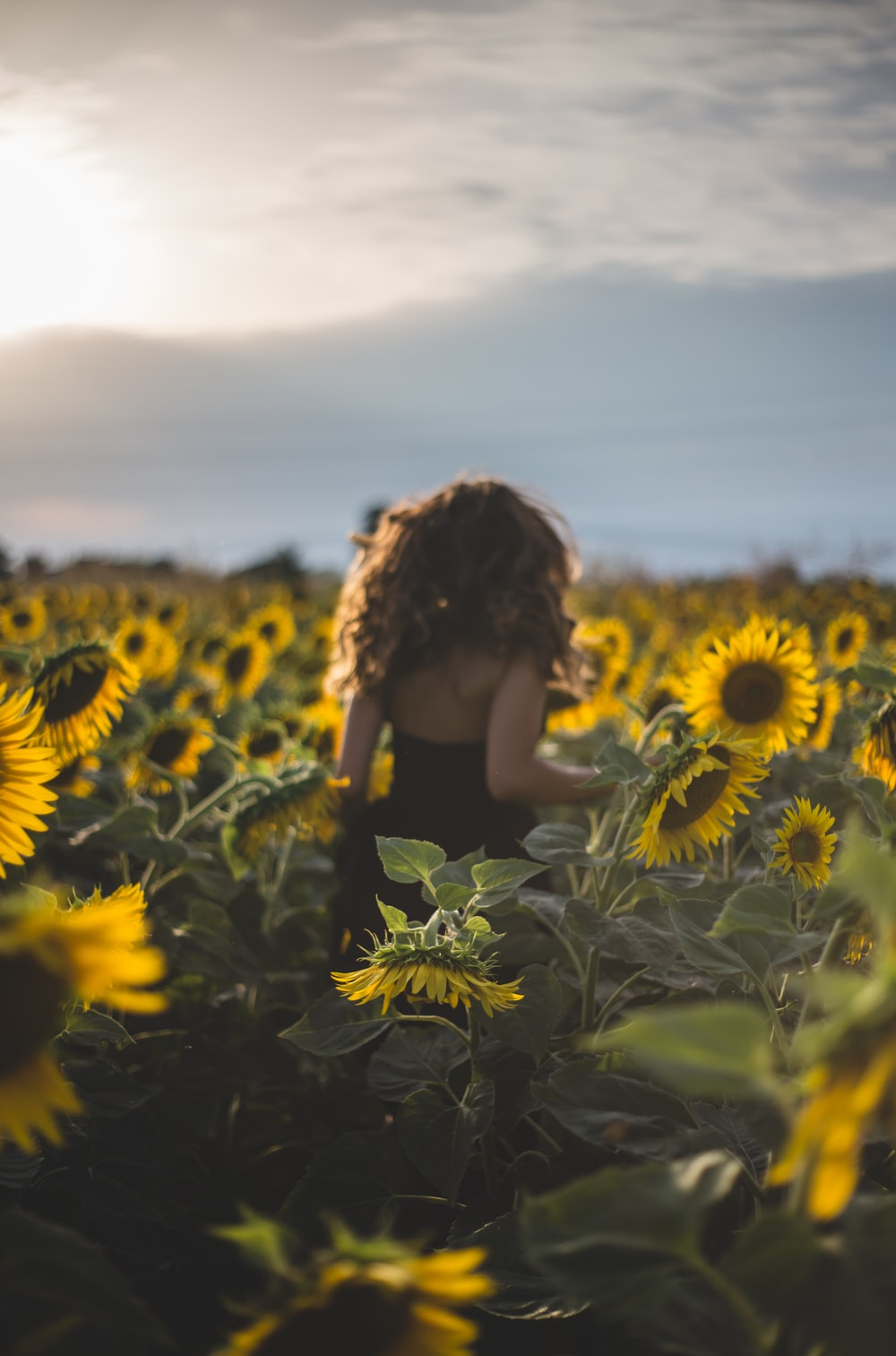 woman standing on sunflower field at daytime