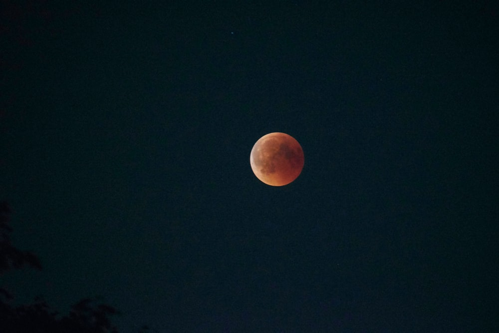 photography of super blood moon